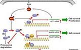 浙大联合课题组发文Cell子刊揭示干细胞癌变机理