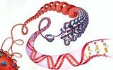 科学家开发出高质量的组蛋白PTM抗体