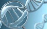 """中国生物产业:不是""""垃圾DNA"""""""