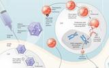 基因治疗20年回顾展望(2):失明的基因治疗