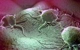 癌细胞社交活动为癌症研究开辟新方向