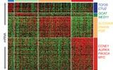 多项研究发现:癌症特征决定于基因图谱而非发病器官