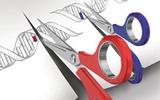 基因编辑新进展: 关键酶消除CRISPR-Cas技术脱靶效应