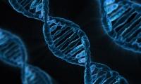 多组学研究发现肺癌诊疗潜在靶标
