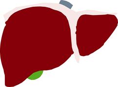 "Nature子刊:重大突破!新技术可让肝脏实现体外""7天超长待机""!"