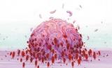 中国团队巧用免疫细胞运输药物,穿透血脑屏障对抗恶性脑瘤 | Nature子刊