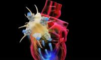 今日《科学》子刊:程柯团队带来抗体药物靶向受损心脏新方法