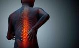 PNAS:新研究带来脊髓损伤修复的希望