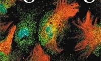 调节神经元兴奋性 星形胶质细胞能办到