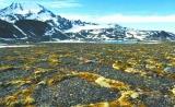 全球变暖,古老病毒和细菌会复活吗