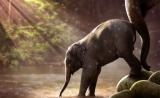 """大象为什么患癌率低?""""僵尸基因""""是关键"""