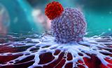 深度:T细胞受体疗法治疗实体瘤的机遇和挑战