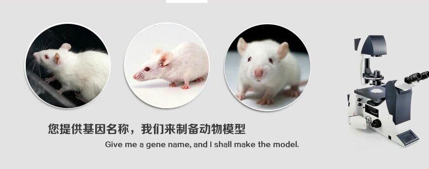 基因敲除小鼠一站式解决方案
