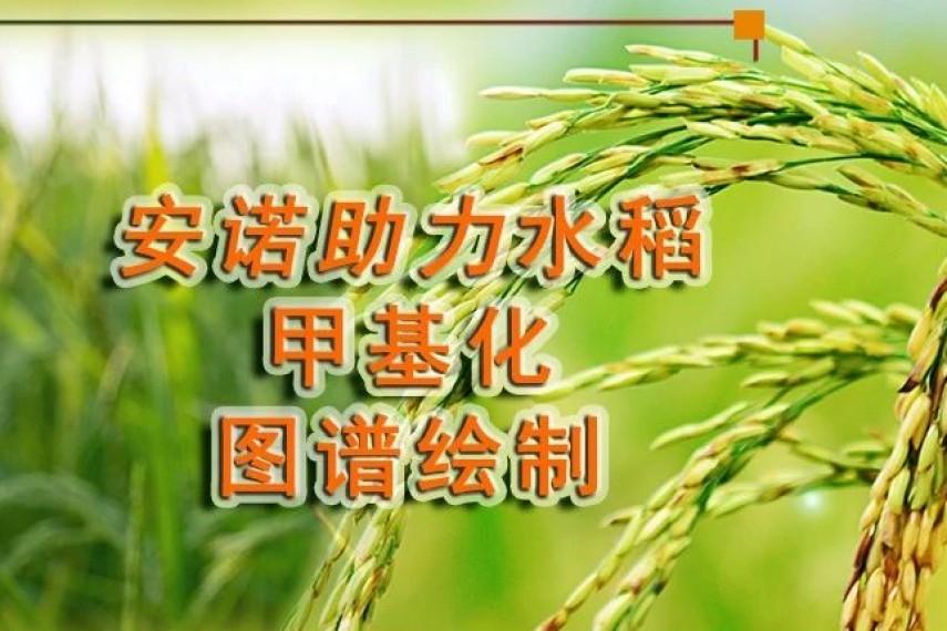 Nature Plants:安诺基因助力世界首个水稻全基因组6mA图谱绘制