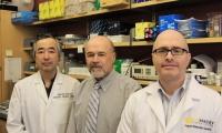 """Cancer Research:休眠肿瘤很狡猾,先进入衰老状态再""""爆发"""""""