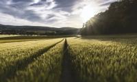 Science重磅:增产最多40%!超级农作物要来了?
