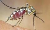 什么样的人招蚊子?其实科学家也不完全知道答案