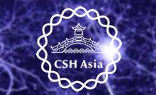 2013冷泉港亚洲科学会议-神经回路的发育、功能和疾病