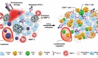 Science子刊:中科院科学家找到癌症免疫耐受新方法!