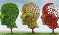 Nature子刊:阿兹海默症元凶——tau蛋白也搞性别歧视?