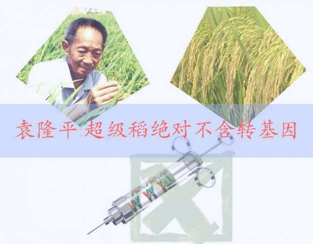 袁隆平在青岛揭秘超级稻:绝对不含转基因