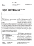 Adipose Tissue Engineering by Human ADSCs