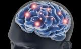 """记忆的""""ID""""藏在哪?Science:突触可塑性对记忆储存很重要"""