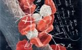 癌症反攻时,要如何回击?科学家从达尔文的笔记本里寻找答案