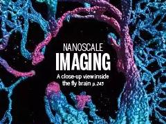 纳米级清晰度看大脑是怎样一种体验?