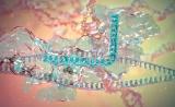 新华社:基因编辑加速迈向临床应用