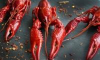 速览 | Nature子刊:小龙虾约吗?科学家发现虾青素可抑制结直肠癌转移