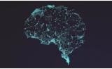 为何学习新知识这么难?因为大脑可能比你想象中更死板