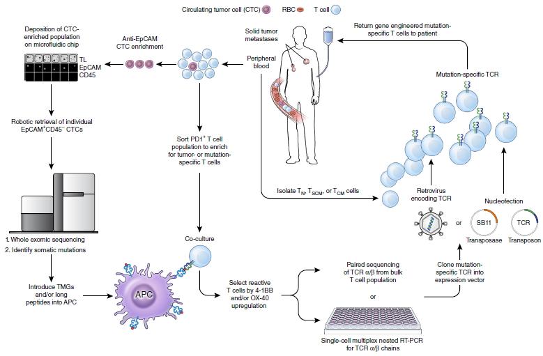 但大多数患者可以通过免疫球蛋白补给存活下来