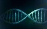 纠正疾病!两篇Nature医学揭示:改良版CRISPR新进展