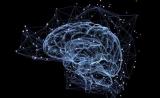 不是科幻电影!人脑可以预测我们即将看到什么