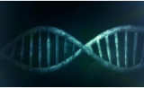 GEN:基因编辑之下,罕见病治疗触目可及