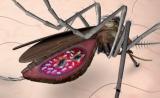 上海生科院等在阻断疟疾传播研究中取得重要进展