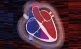 """首个!心脏蛋白质""""蓝图""""出炉,指示个体化医疗"""