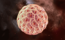 干细胞治疗:锋芒出鞘