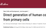 经济、高效、快速!干细胞技术构建人脑再下一城