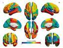 复旦大学冯建峰教授团队首次绘制大脑功能网络动态图谱