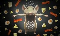 火上浇油!Cell:高脂肪饮食可加速诱发结直肠癌