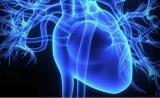 《柳叶刀》:意想不到,上午做心脏手术竟然比下午危险2倍!原来是昼夜节律在背后搞鬼