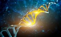 """Science:控制全身再生过程的""""基因开关"""",你想打开吗?"""