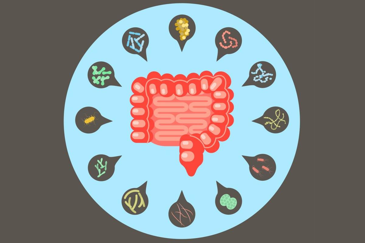 """小生物调控大健康!3篇论文""""剑指""""肠道菌群在2型糖尿病中的作用"""