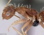 美科学家欲拍遍世界1.2万种蚂蚁