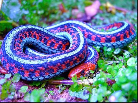 组图-动物世界七大惊艳蛇 多姿多彩令人惊叹-图库