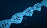 基因剪刀剪切DNA过程首次捕获
