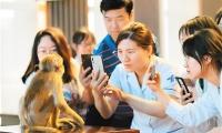 恒河猴甲亢模型驗證疫苗有效,為甲亢預防奠定科研基礎