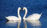 Nature:爱情原来是——被激活的神经环路……